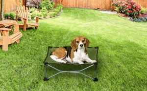 Carlson Pet Products Green Portable Pup Pet Bed