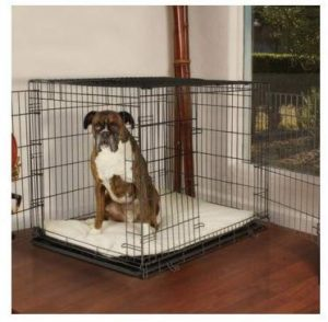 Petco Premium Two Door Dog Crate