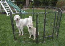 38 Best Dog Playpens (Reviews Updated 2021)
