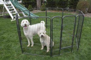 Best Dog Playpen Reviews