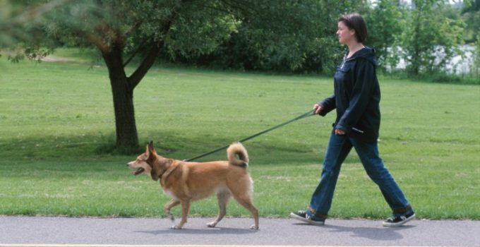 Get Fit While Walking Your Dog and Socialize It at the Time