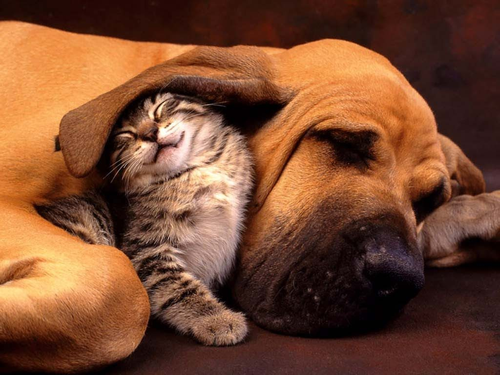 How Cats and Dogs Can Get Along in the Same Home - Dog Produ
