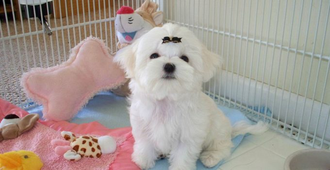 How to Train Your Puppy to Use a Playpen