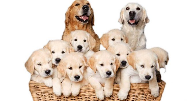 The Expenses of Breeding Dogs