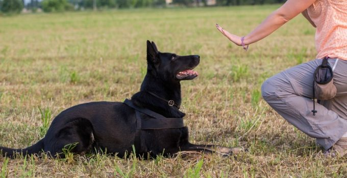 Tips on Dog Obedience Training