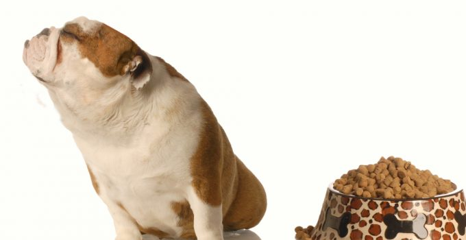 What to Do When Your Dog Refuses to Eat