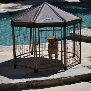 Advantek Pet Gazebo Modular Outdoor Dog Kennel Product Image