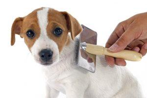 Best Dog Brush Reviews