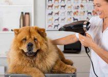 Best Dog Hair Dryer Reviews