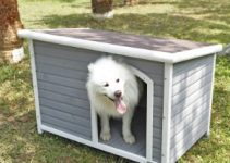 5 Best Dog Houses (Reviews Updated 2021)