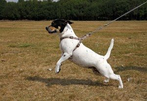 Best Leash for Dogs that Pull Reviews