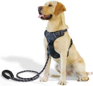 Raining Pet No Pull Dog Harness Dogs Leash Set