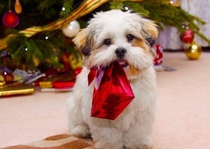 5 Best Christmas Presents For Dogs Reviews
