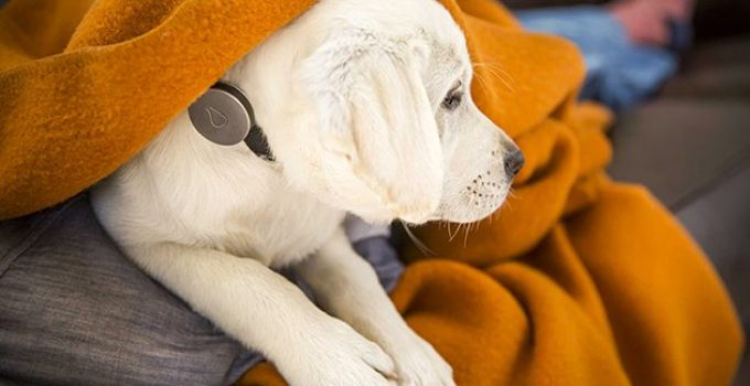 5 Best Dog Activity Monitor Reviews