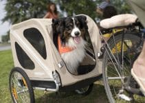 5 Best Dog Bike Trailers (Reviews Updated 2021)