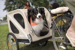 5 Best Dog Bike Trailer Reviews