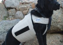 5 Best Dog Cooling Vest Reviews
