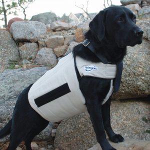 5 Best Dog Cooling Vest Reviews