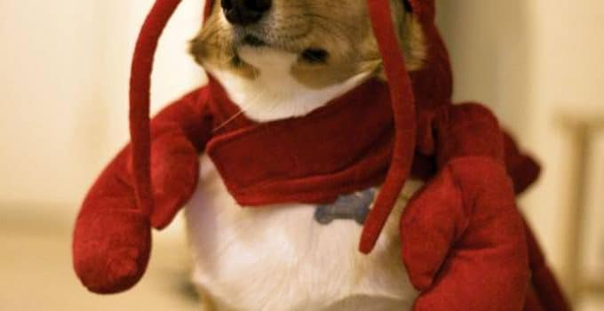 5 Best Dog Costume Reviews
