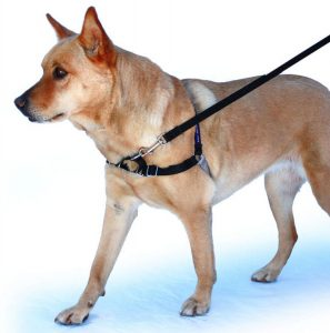 5 Best Dog Harness Reviews