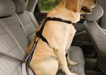 5 Best Dog Seat Belt Reviews