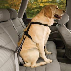 Best Dog Seat Belt >> 5 Best Dog Seat Belt Reviews Updated 2019 Dog Product Picker