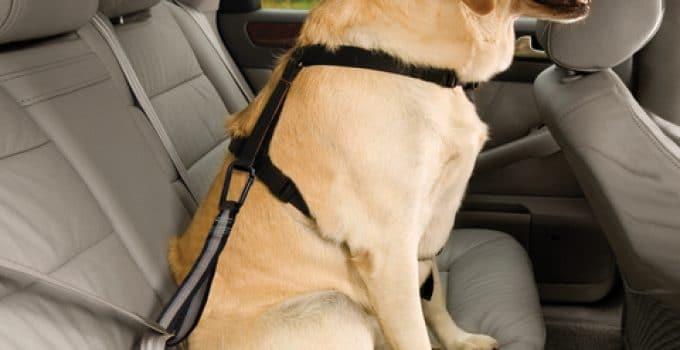 5 Best Dog Seat Belt Reviews
