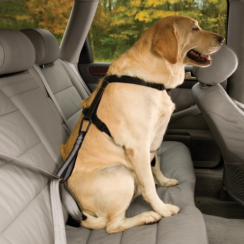 25 Best Dog Seat Belts Reviews Updated