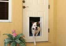 18 Best Electronic Dog Doors (Reviews Updated 2021)