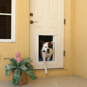 5 Best Electronic Dog Door Reviews