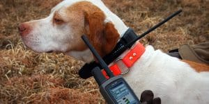 5 Best Gps Tracker For Dogs Reviews
