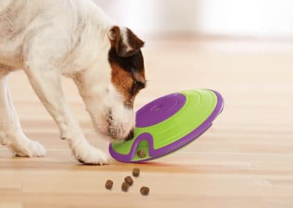 5 Best Interactive Dog Toy Reviews