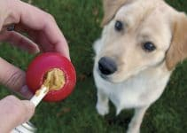 5 Best Puzzle Toys for Dogs (Reviews Updated 2021)