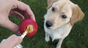 5 Best Puzzle Toys For Dogs Reviews
