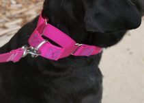 5 Best Dog Collars (Reviews Updated 2021)