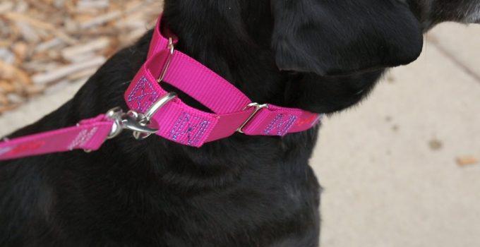 Best Dog Collar Reviews