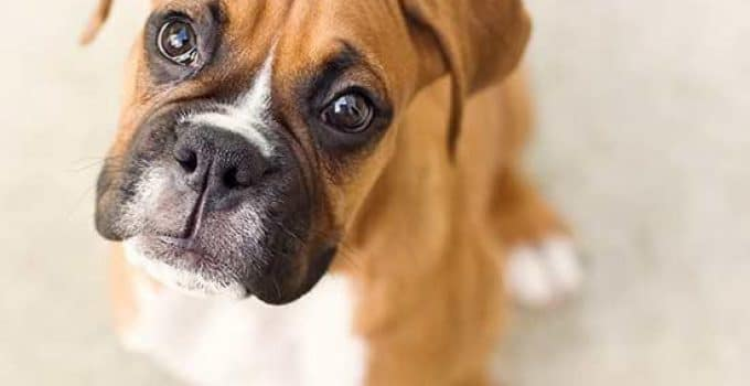Best Dog Food For Boxers Reviews