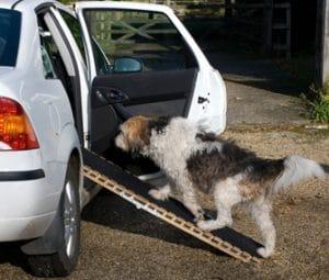 Best Dog Ramp Reviews