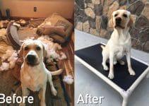 16 Best Indestructible Dog Beds (Reviews Updated 2021)