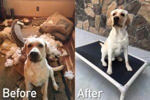 Best Indestructible Dog Bed Reviews