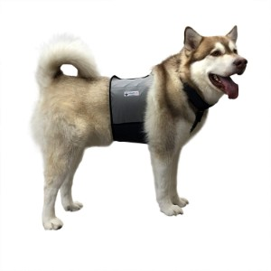 5 Best Dog Cooling Vest Reviews (Updated 2019) 4