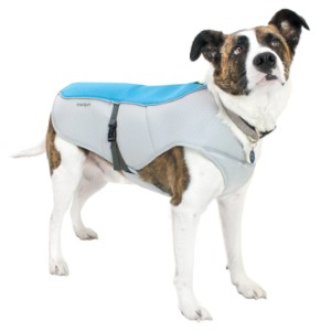 5 Best Dog Cooling Vest Reviews (Updated 2019) 5