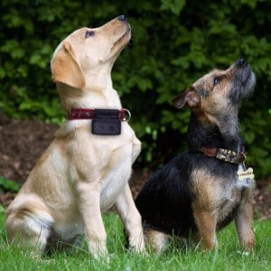 5 Best GPS Tracker for Dogs Reviews (Updated 2019) 4