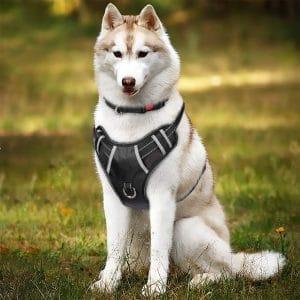 Tianyao Dog Harness