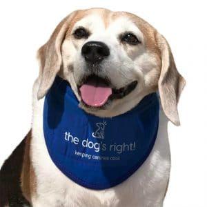 The Dog's Right! Dog Cooling Collar Bandana
