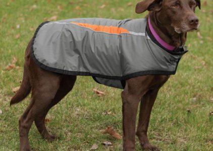 5 Best Dog Raincoat Reviews