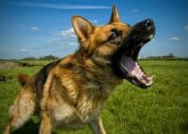 32 Best Dog Silencers (Reviews Updated 2021)