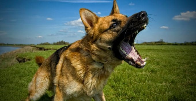 5 Best Dog Silencer Reviews