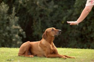 5 Best Dog Training Book Reviews