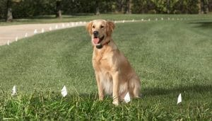 5 Best Electronic Dog Fence Reviews
